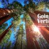 going-vertical-trees-slide